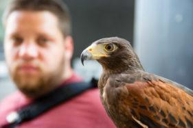 Adler Tierfotografie